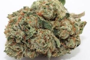 Tahoe OG Marijuana Strain product image