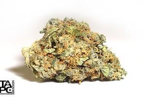 Tutankhamon Marijuana Strain product image