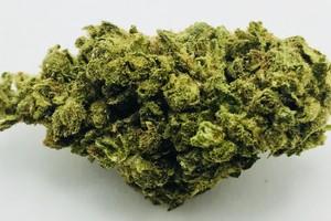 XJ-13 Marijuana Strain product image