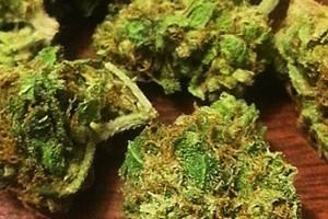 Blueberry Grape Ape Marijuana Strain featured image
