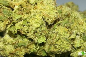 Blueberry Marijuana Strain featured image
