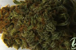 Deadhead OG Marijuana Strain featured image