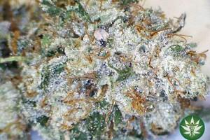 Death Star Marijuana Strain featured image