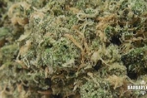 Double Dream Marijuana Strain featured image