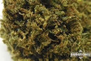 Harlequin OG Marijuana Strain featured image