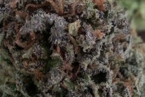 Maui Wowie Marijuana Strain featured image