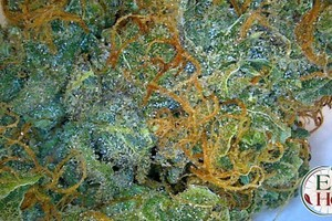 Northern Lights Marijuana Strain featured image
