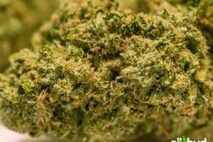 Super Silver Haze Marijuana Strain featured image