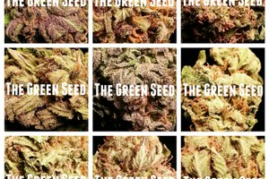 The Green Seed Marijuana Dispensary image