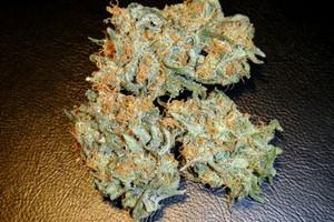 Aurora Indica Marijuana Strain image