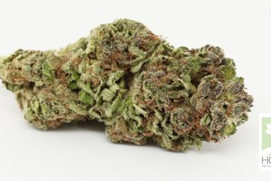 Blue City Diesel Marijuana Strain image