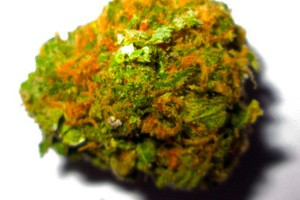 Blue Dream Marijuana Strain image