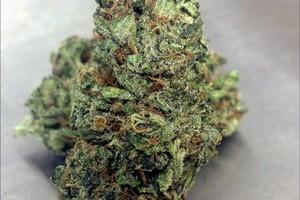 Blueberry Haze Marijuana Strain image