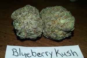 Blueberry Kush Marijuana Strain image
