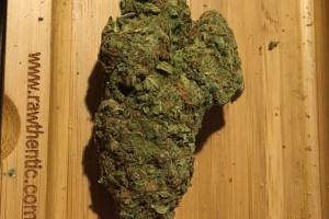 Blueberry Muffin Marijuana Strain image
