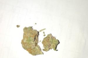 Charlie Sheen Marijuana Strain image