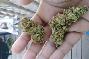 Cherry AK-47 Marijuana Strain image