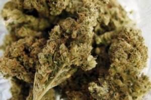 Cherry Charlotte Marijuana Strain image
