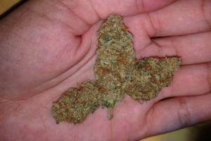 Cherry Cream Pie Marijuana Strain image