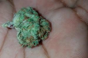 Cherry Pie Marijuana Strain image