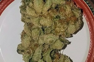 Crater Lake Marijuana Strain image