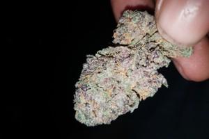 Crystal Coma Marijuana Strain image