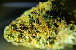 Diablo OG Kush Marijuana Strain image