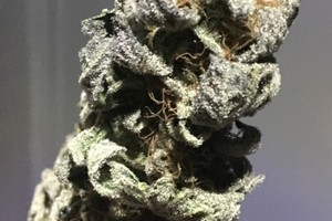 DJ Short Blueberry Marijuana Strain image