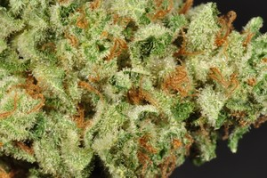 Flo OG Marijuana Strain image