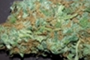 Fruit Punch Marijuana Strain image
