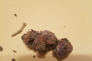 Gelato Marijuana Strain image