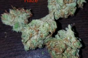 Ghost Train Haze Marijuana Strain image