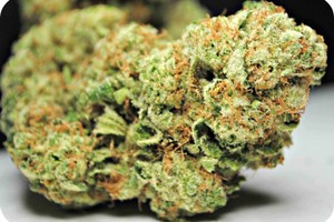 God Bud Marijuana Strain image