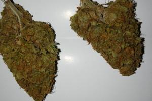 God's Gift Marijuana Strain image