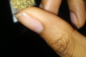 Gorilla Glue       Marijuana Strain image