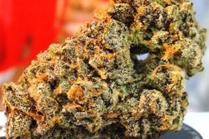 Hawaiian Pie Marijuana Strain image