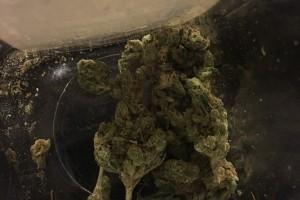 Headband Marijuana Strain image