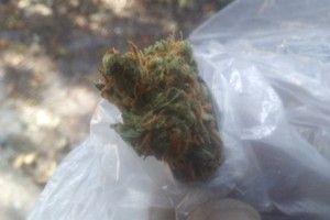 khalifa kush Marijuana Strain image