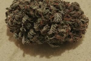 King Kush Marijuana Strain image