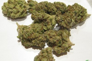Lemon Larry Marijuana Strain image