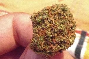 Lemon Tree Marijuana Strain image
