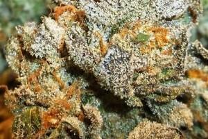 OGKB Marijuana Strain image