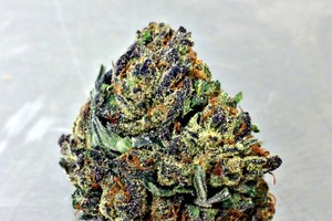 Orange Crush Marijuana Strain image