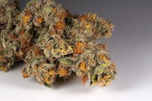 Marijuana Strains & Fatigue Symptoms   AllBud