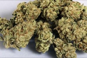Phantom OG Marijuana Strain image