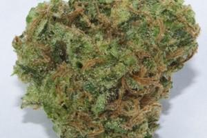 Pineapple Jack Marijuana Strain image