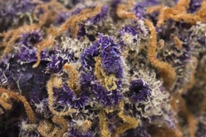 Purple Nerds Marijuana Strain image