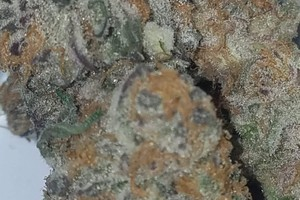 Purple Punch Marijuana Strain image