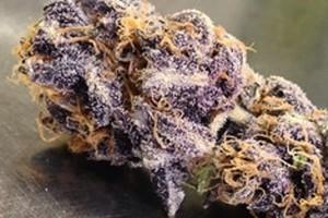 Purple Voodoo Marijuana Strain image