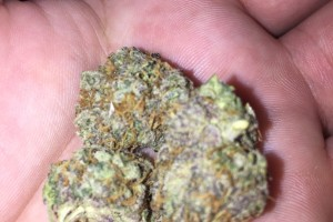 Sensi Star Marijuana Strain image